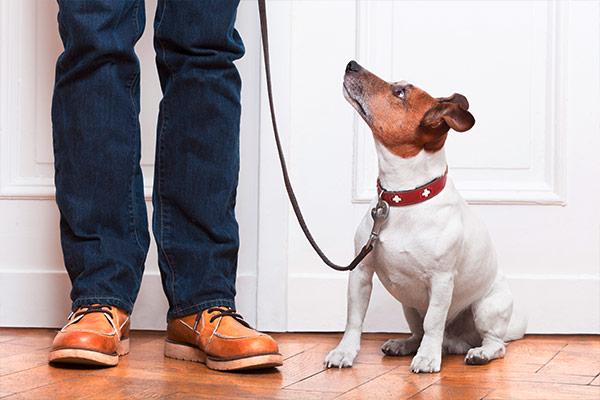 Hundehalterhaftpflicht Gesetzesänderung 2016